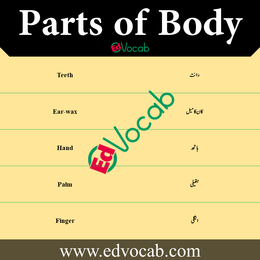 Parts of Body Names Vocabulary in Urdu pdf