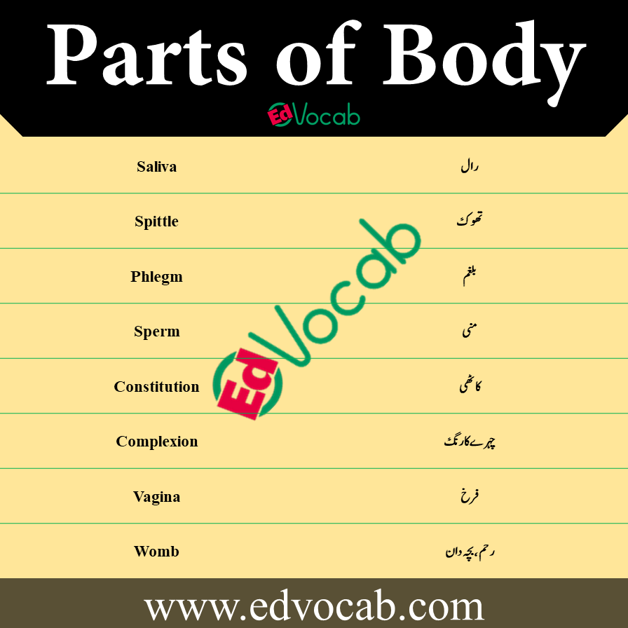 Parts of Body Names Urdu to English
