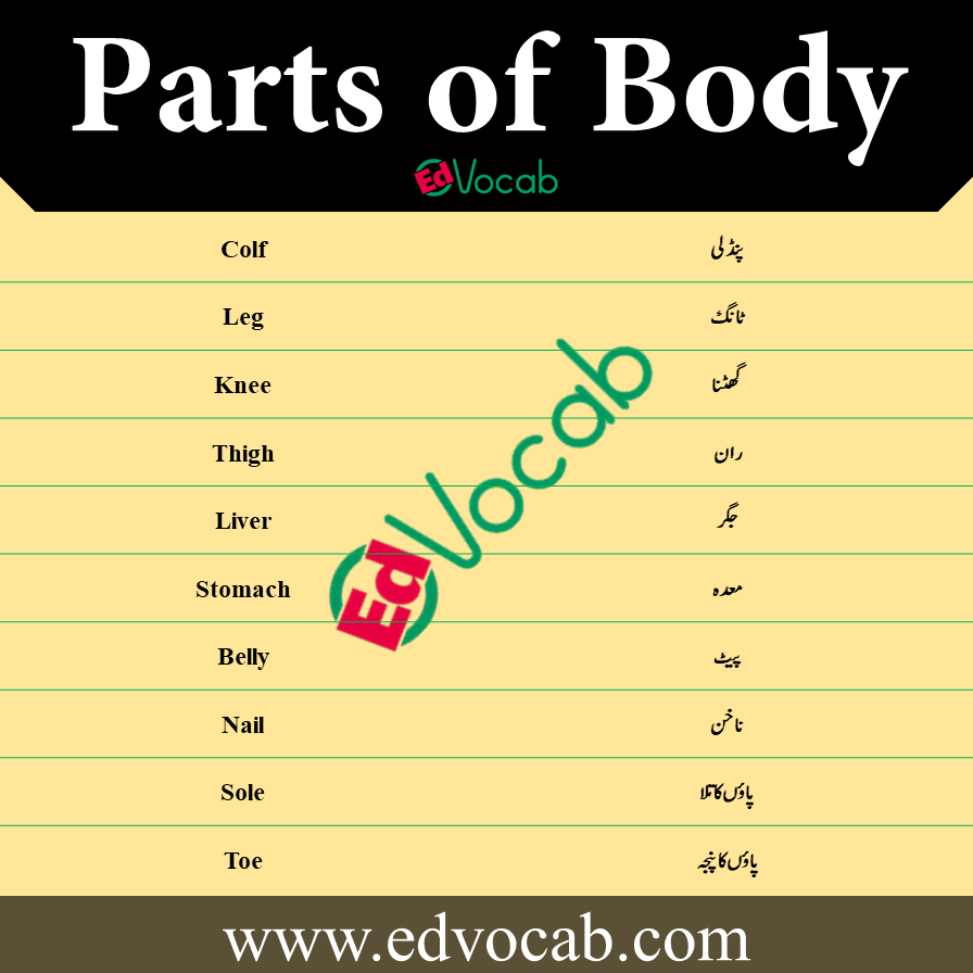 Parts of Body Names Vocabulary in Urdu