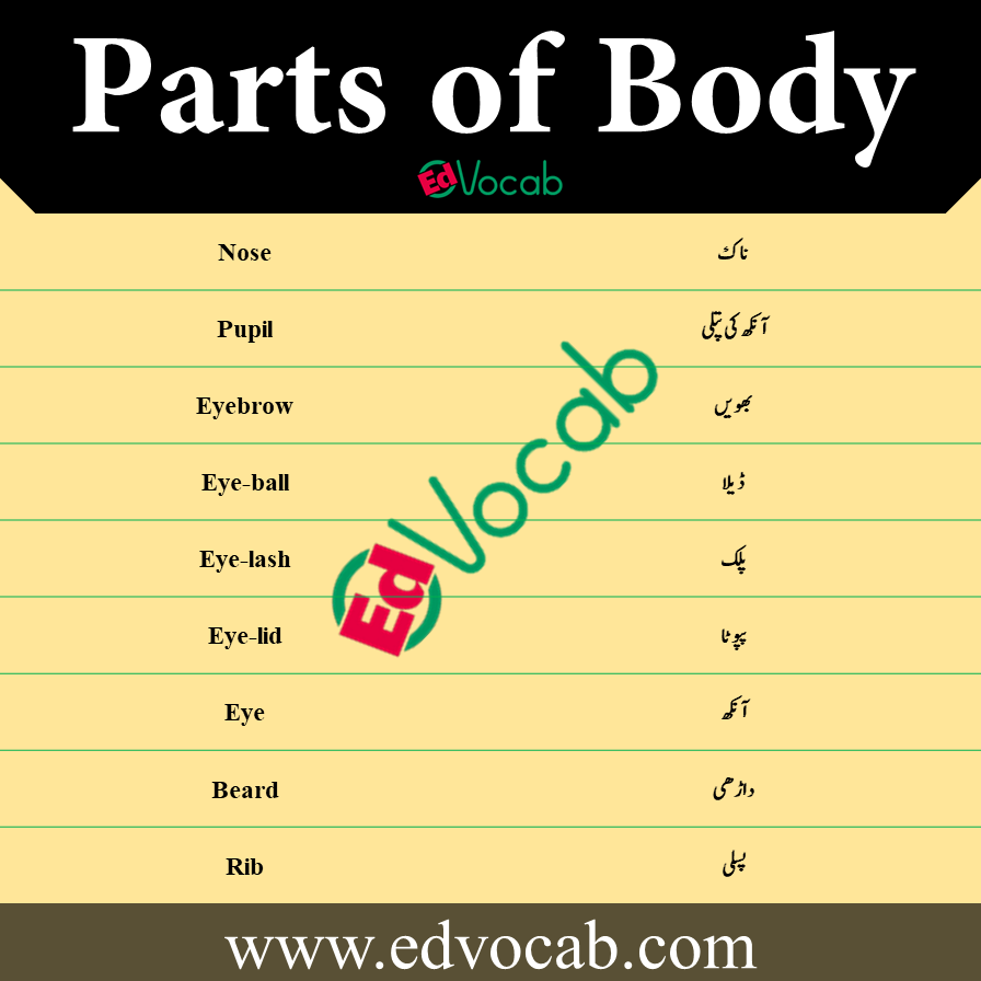 parts of body in English with pictures pdf