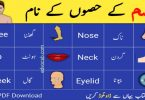 Body parts name in english Parts of body names with pictures 1