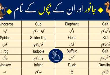 Click to Download Animals Names in English and Urdu PDF Booklet