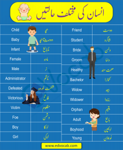 Download Phases of Man with Urdu Meanings